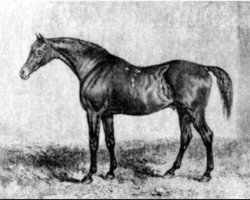 horse Muley xx (Thoroughbred, 1810, from Orville xx)
