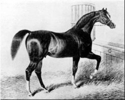 horse Sultan xx (Thoroughbred, 1816, from Selim xx)