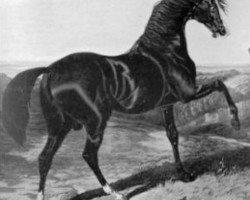 horse Camel xx (Thoroughbred, 1822, from Whalebone xx)