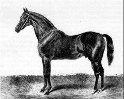 horse King Tom xx (Thoroughbred, 1851, from Harkaway xx)