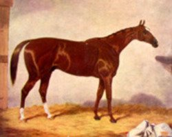 horse Stockwell xx (Thoroughbred, 1849, from The Baron xx)