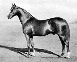 horse Cyllene xx (Thoroughbred, 1895, from Bona Vista xx)