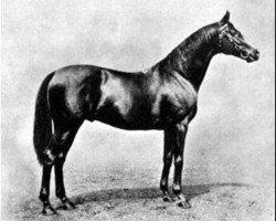 horse Cicero xx (Thoroughbred, 1902, from Cyllene xx)