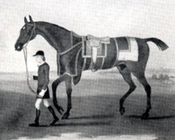 horse Cade xx (Thoroughbred, 1734, from Godolphin Arabian)