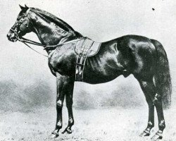 horse Galopin xx (Thoroughbred, 1872, from Vedette xx)
