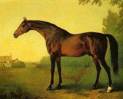 horse Highflyer xx (Thoroughbred, 1774, from Herod xx)
