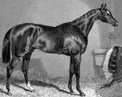 horse The Baron xx (Thoroughbred, 1842, from Birdcatcher xx)
