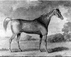 horse Buzzard 1787 xx (Thoroughbred, 1787, from Woodpecker xx)