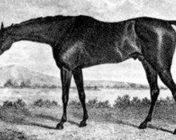 horse Sorcerer xx (Thoroughbred, 1796, from Trumpator xx)