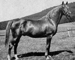 horse Julmond (Trakehner, 1938, from Julianus)