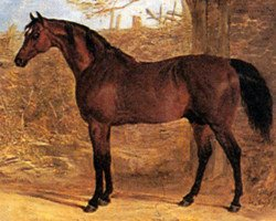 horse Whisker xx (Thoroughbred, 1812, from Waxy xx)