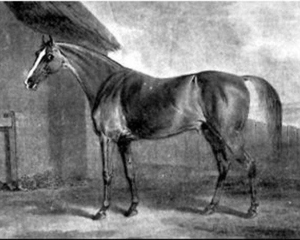 horse Pot8os xx (Potoooooooo xx) (Thoroughbred, 1773, from Eclipse xx)