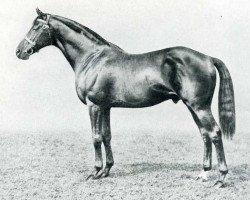 horse Son In Law xx (Thoroughbred, 1911, from Dark Ronald xx)