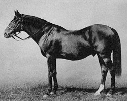 horse Springfield xx (Thoroughbred, 1873, from St Albans xx)