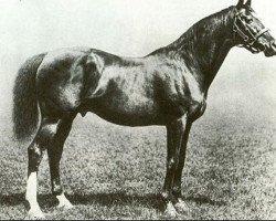horse Sainfoin xx (Thoroughbred, 1887, from Springfield xx)