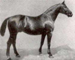 horse Fling (Hanoverian, 1911, from Flingarth)