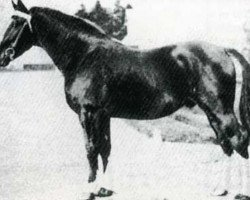 horse Vas Y Donc (Anglo-Norman, 1921, from Karikal)