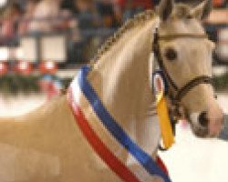 dressage horse Monte Christo (German Riding Pony, 1999, from The Braes My Mobility)