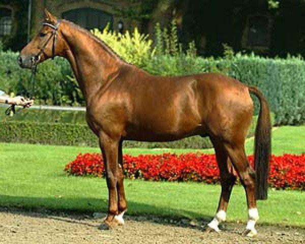horse Douceur (Hanoverian, 1998, from Davignon I)
