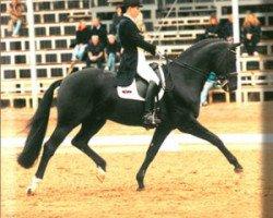 dressage horse Del Piero (Hanoverian, 1993, from Donnerhall)