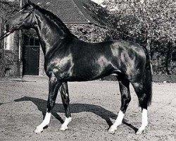 horse Artwig (Hanoverian, 1974, from Argentan I)