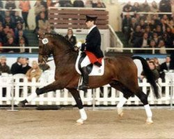 horse Ehrentusch (Rhinelander, 1984, from Ehrensold)