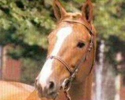 horse Tresor de Cheux (Selle Français, 1985, from Grand Veneur)