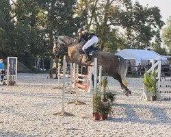 dressage horse Brasilia 32 (Rhinelander, 2015, from Farbenspiel)