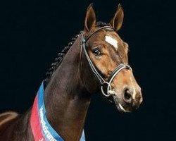horse Sandro Song (Oldenburg, 1988, from Sandro)