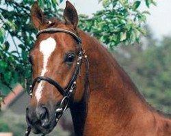 horse Grand Cru (Hanoverian, 1990, from Grand Garcon)