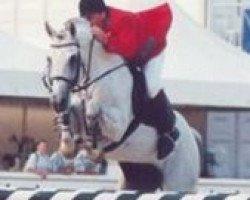 horse Lucky Luke (Holsteiner, 1986, from Lacapo)