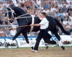 horse Warkant (Hanoverian, 1983, from World Cup I)