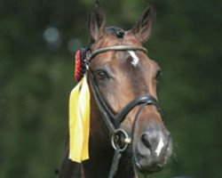 dressage horse Farewell III (Westphalian, 2000, from Fidermark I)