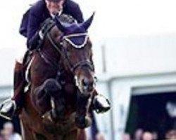 horse Polydox (Westphalian, 1990, from Polydor)
