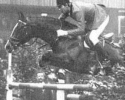 horse Joost (Holsteiner, 1968, from Consul)