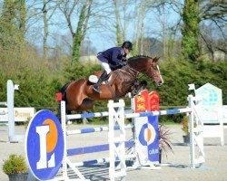 jumper Consul de la Vie Z (Zangersheide riding horse, 2004, from Clinton)