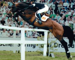 horse Concetto (Danish Warmblood, 1989, from Caletto I)