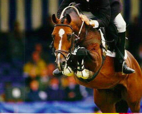 horse Heartbreaker (Royal Warmblood Studbook of the Netherlands (KWPN), 1989, from Nimmerdor)