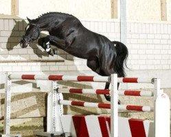 jumper Diacasall (Holsteiner, 2009, from Diarado)
