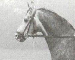horse Orthos (Westphalian, 1973, from Gottschalk)