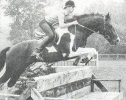 horse Samber (Royal Warmblood Studbook of the Netherlands (KWPN), 1976, from Pericles xx)