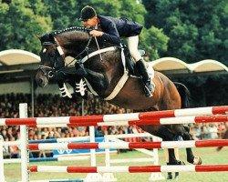 horse Lesotho (Holsteiner, 1988, from Landgraf I)