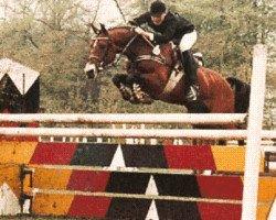 horse Nantano (German Riding Pony, 1975, from Nante I)