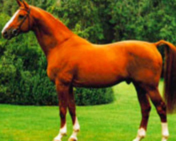 horse Lys de Darmen (Selle Français, 1977, from Et Hop AA)