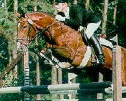 horse Laptop (Hanoverian, 1992, from Loredo)