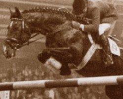 horse Lord 1134 (Holsteiner, 1967, from Ladykiller xx)