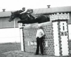 dressage horse Calypso II (Holsteiner, 1974, from Cor de la Bryère)