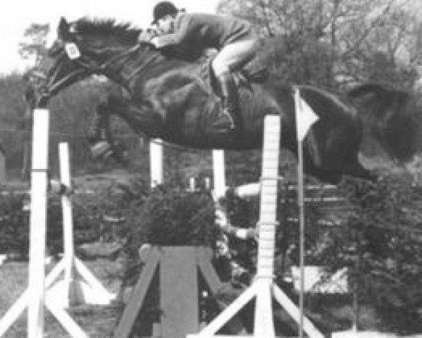 horse Valine H (Holsteiner, 1961, from Cottage Son xx)