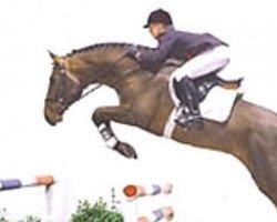 jumper Cosimo (Holsteiner, 1999, from Contender)