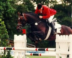 horse Rocket Star (Holsteiner, 1988, from Ramiro Z)